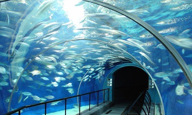 10 erstaunliche Ozeanarien in der Welt