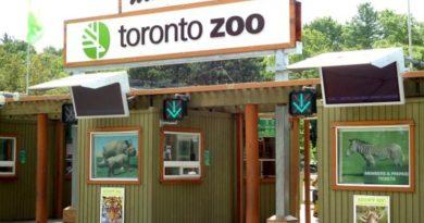 Top 10 der besten Zoos der Welt