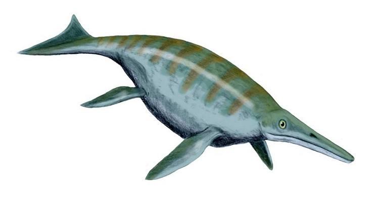 Shonisaurus